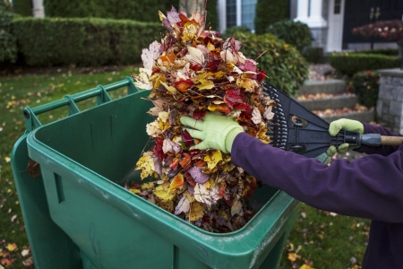 Person putting in autumn leaves in to recycle  bin with yard and home in background