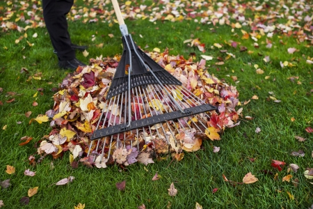Person holding yard rake with pile of autumn leaves under rake