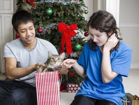 Brother and sister find cat in gift bag during Christmas day  photo