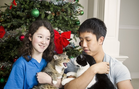 Family cat snarls at other family members during holiday season with Christmas tree in background  photo
