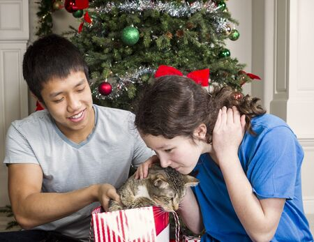 Pet cat comes out of gift bag with family and Christmas tree in background  photo