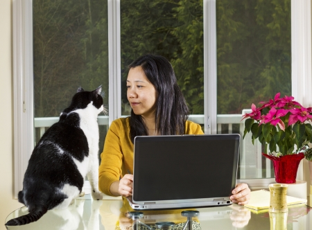 Mature Asian woman looking into family cat face while working at home with notebook computer on glass table with large windows behind with visible evergreen trees in background