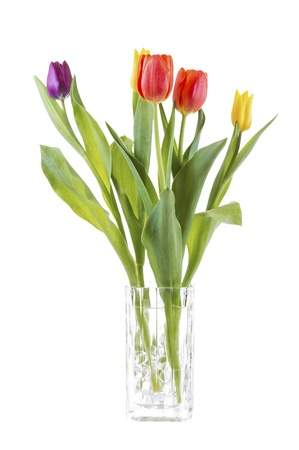 tulips in vase: Vertical photo of tulip flowers in glass vase isolated on white background