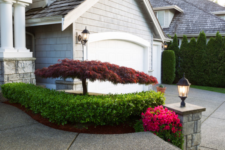 japanese maple: Horizontal photo of blooming Japanese maple tree in front of home exterior during late spring season evening