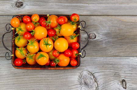 Top view of garden fresh tomatoes in basket on rustic wooden boards