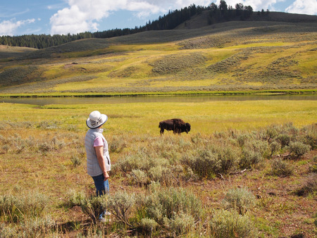 mature woman: Image of mature woman watching North American Bison (Buffalo) while grazing in open prairie with Yellowstone River in background Stock Photo