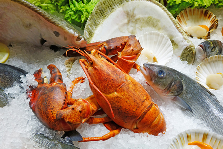 raw lobster: Close up image of fresh seafood on ice. Shallow depth of field with the focus on the lobster.