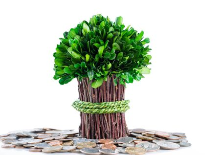 Small plant and branches coming out of pile of coins on glass table with isolated white background and reflection. Money tree concept. photo
