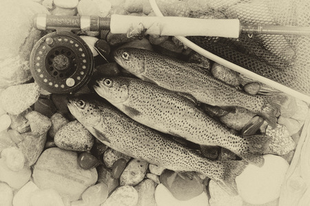 fish rod: Three wild trout with fishing fly reel, landing net and assorted flies on wet river bed stones with vintage concept. Stock Photo