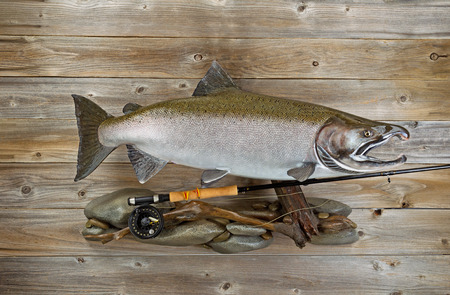 king salmon: Large salmon with fly rod and reel on rocks and rustic wood. Stock Photo