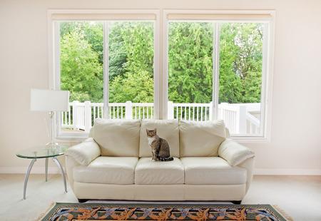 Familie kat zittend op een witte lederen bank en grote ramen tonen heldere groene bomen op de achtergrond. Stockfoto