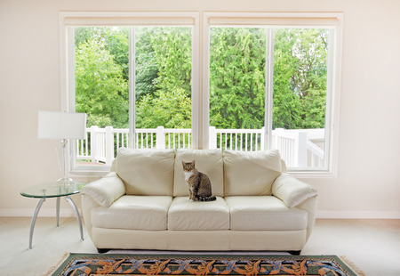 family sofa: Family cat sitting on white leather couch and large windows showing bright green trees in background.