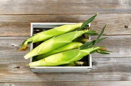 angled view: High angled view of a vintage wooden crate filled with freshly picked corn on rustic wood background.