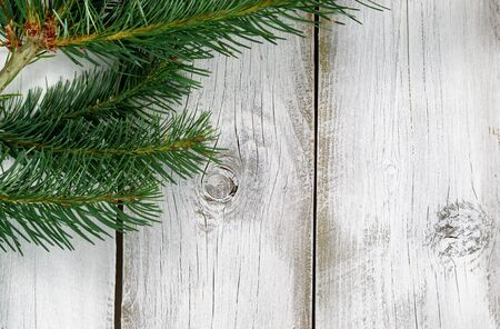 white christmas tree: Real Northwest Fraiser Fir tree branches on rustic white wooden boards. Christmas season concept. Stock Photo