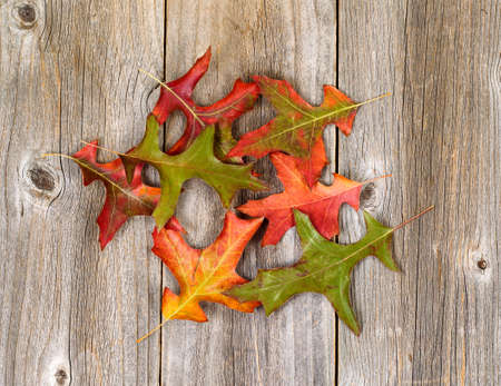 fading: Fading autumn leaves on rustic wooden boards that are placed vertically.