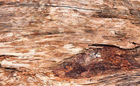 Dry weathered tree. Horizontal layout.