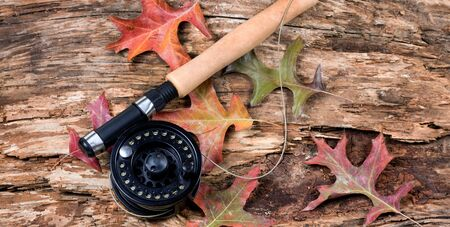 fishing reel: Fly fishing reel with dry weathered tree and fall leaves. Horizontal layout.