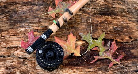 fishing reel: Fly fishing reel with wet weathered tree and fall leaves. Horizontal layout.