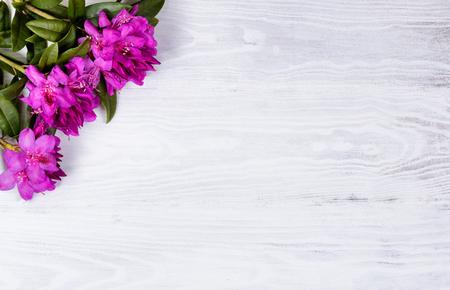 프레임의 왼쪽 상단 모서리에 흰색 나무에 야생 진달래 꽃. 오버 헤드보기입니다. 스톡 콘텐츠 - 56381762