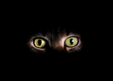 dark eyes: Animal eyes and partial face with fading dark background.