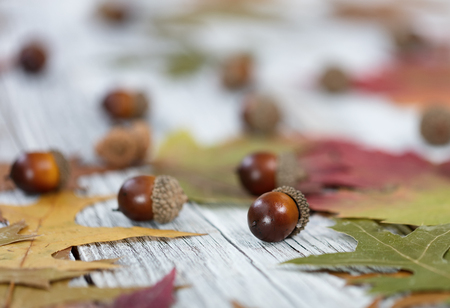 Close up of Autumn seasonal foliage and acorns for seasonal holidays on white rustic wooden boards
