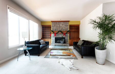 Family dog in modern living or family room decorated with Christmas objects on fireplace