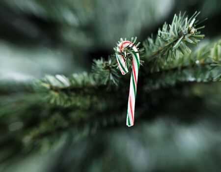 Traditional stripped candy cane Christmas decoration hanging on artificial tree 스톡 콘텐츠