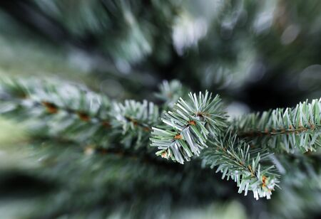 Traditional artificial Christmas tree in close up layout