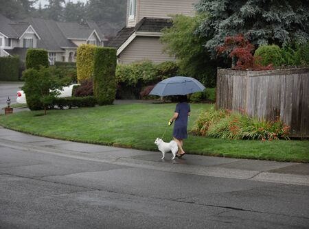 Woman walking her small dog in the rain under large umbrella 스톡 콘텐츠