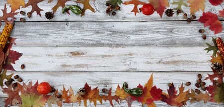 Autumn decorations made of leaves, acorns, corn and pine cones in rectangle border on white rustic wood for Thanksgiving or Halloween season