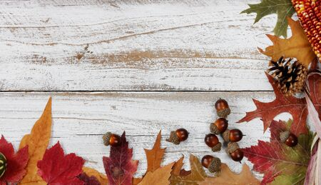 Autumn decorations made of leaves, acorns, corn and pine cones on right and bottom borders on white rustic wood for Thanksgiving or Halloween season 版權商用圖片