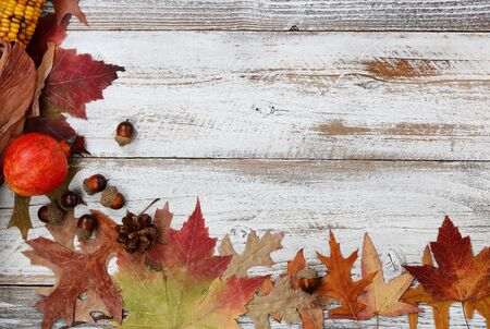 Autumn decorations made of leaves, acorns, corn and pine cones on left side border on white rustic wood for Thanksgiving or Halloween season 版權商用圖片