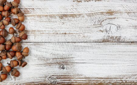 Autumn decorations with real acorns on white rustic wooden boards for Halloween or Thanksgiving holiday concept 版權商用圖片