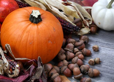 Thanksgiving Pumpkin with acorns and corn on rustic wood
