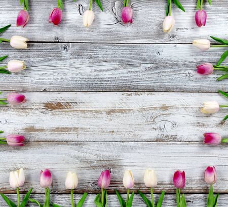 Mothers Day or Easter holiday concept with pink tulip box shaped border on white rustic wood