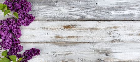 Deep purple lilac flowers with branches on white rustic wooden background with copy space. Ideal for spring time and Mothers Day concepts. 版權商用圖片