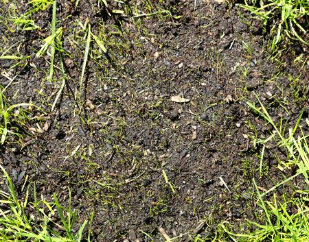 New grass growing from springtime seeding