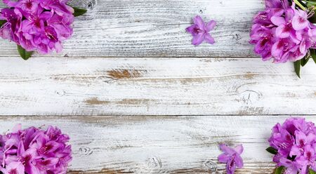 Corner borders of purple rhododendron flowers on white rustic wooden background with copy space. Top view in flat lay format.