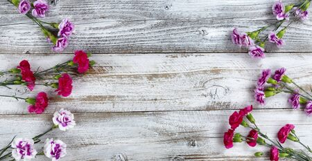Corner borders of carnation flowers on white rustic wooden background with copy space. Top view in flat lay format.