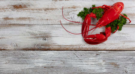 Whole red lobster with fresh parsley on white rustic wooden background