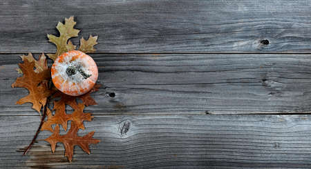 Single seasonal autumn pumpkin with oak leave branch on weathered wood for Thanksgiving or Halloween holiday concept