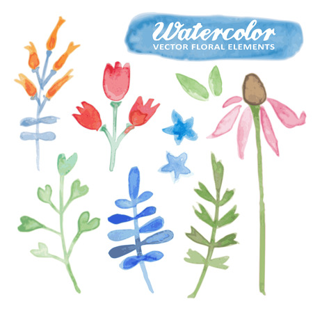 vetor: Set of watercolor hand drawn floral elements, isolated vetor flowers, herbs and leaves Illustration