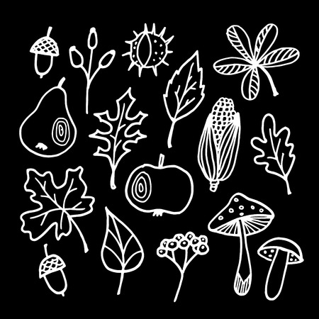 Set of chalk autumn, fall elements, various leaves, apple, pear, acorn, mushrooms on blackboard, isolated vector sketches