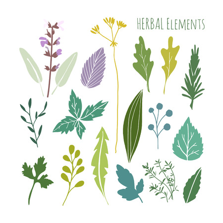 izole nesneleri: Set of hand drawn herbal graphic elements, leaves, vector illustration, isolated objects, flat design Çizim