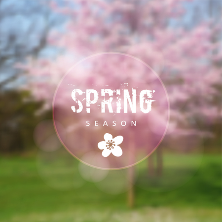 cherry trees: Spring background with blurred blossoming cherry trees and green graaa, illustration