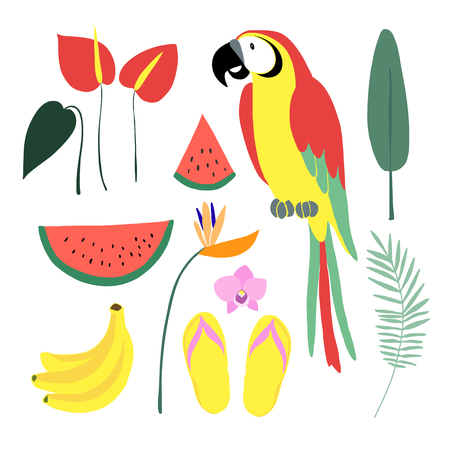 ave del paraiso: elementos gráficos tropical verano. Pájaro del loro. Selva ilustraciones florales, hojas de palma, orquídeas, anturios y Strelitzia flores. Sandía, fruta de plátano. Ilustraciones aisladas, diseño plano. Imagen vectorial Vectores