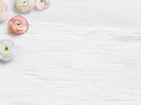 Styled stock photo. Feminine desktop mockup with buttercup flowers, Ranunculus, empty space and shabby white background. Top view. Picture for blog or social media. 免版税图像