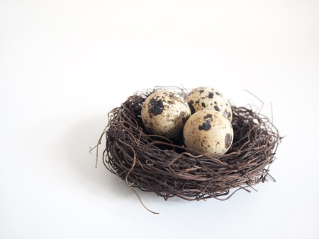 huevos de codorniz: Detail of the birds nest with the brown spotted quail eggs on the white defocused background. Easter and spring concept.