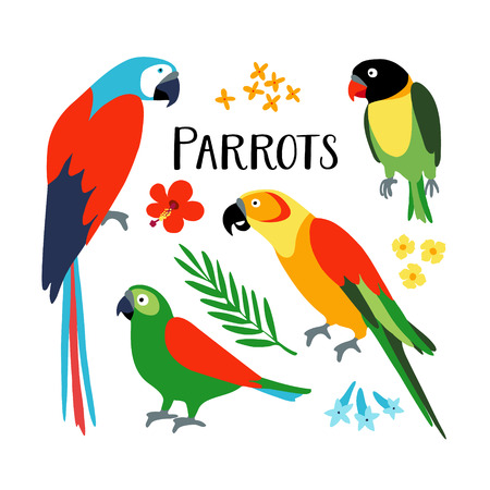 Set of tropical parrots with palm leaf and hibiscus flower. Isolated vector illustration of exotic birds. Flat design.