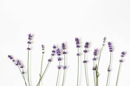 Fiori di lavanda viola in fiore isolati su sfondo bianco da tavola. Cornice floreale decorativa, banner web con Lavandula officinalis. Design estivo francese, concetto di aromaterapia. Erbe aromatiche sane. Archivio Fotografico